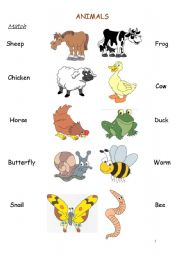 English Worksheet: Match the animal