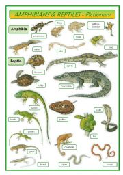 English Worksheet: Amphibians & Reptiles - pictionary