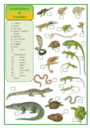 English Worksheet: Amphibians and reptiles - matching exercise