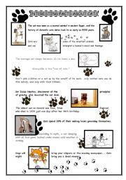 English Worksheet: Interesting facts about cats