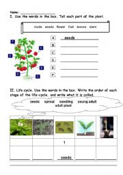english worksheets tell plant parts. Black Bedroom Furniture Sets. Home Design Ideas