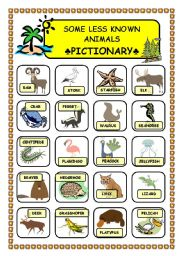 English Worksheets: Less known animals pictionary