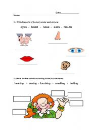 English Worksheets: Senses