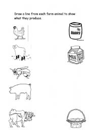 English Worksheets: Animals and their produce