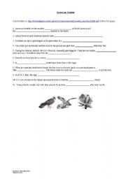 English worksheet: Kestrels