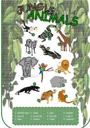 English Worksheets: Jungle animals - a simple worksheet