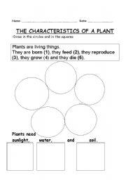 English worksheets: CHARACTERISTICS OF A PLANT