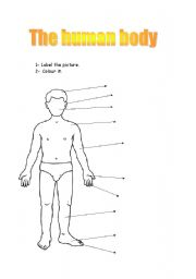 Elementary worksheets on the human body