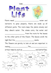 English Worksheet: Plant Life