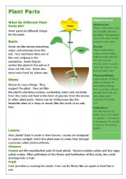 English Worksheet: Plants- reading and comprehension