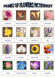 english worksheet names of flowers pictionary