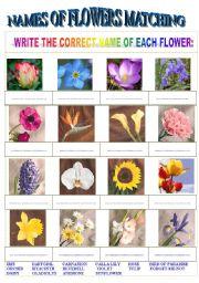 English Worksheet: Names of Flowers Matching