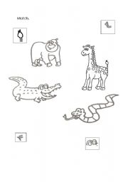 English Worksheets: Animal�s match.