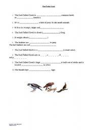 English worksheet: Hawks