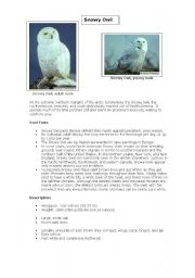 English Worksheets: The Snowy Owl