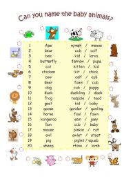 English Worksheets: Can you name the baby animals?