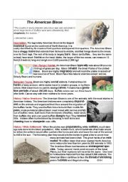 English Worksheets: The American Bison