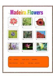 English worksheet: Madeiran flowers