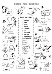 English Worksheet: BIRDS AND INSECTS 1