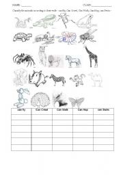 English Worksheet: classification of animals