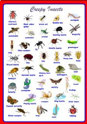 English Worksheet: Creepy Insects Pictionary **fully editable
