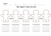 English Worksheet: Main Stages in Human Life Cycle