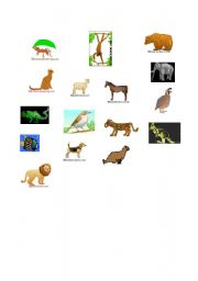 English Worksheets: Most Common Animals