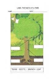 English Worksheet: Lable the parts of a tree