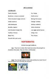 English Worksheets: Type of Animals
