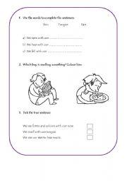 English Worksheets: Senses Activity