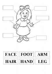 English Worksheets: the body parts