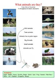English Worksheets: What animals are they?