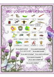 English Worksheet: Are you afraid of insects?