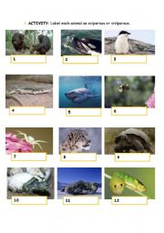 English Worksheets: animals. Clasify the animals into oviparous or viviparous