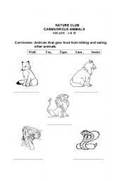 English Worksheets: Carnivores Animals