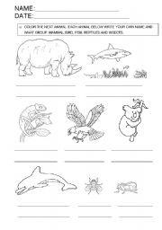English Worksheets: animal classification