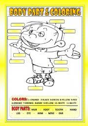 English Worksheets: BODY PARTS & COLORING