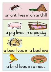 English Worksheet:  19 Animal Homes - Poster 1