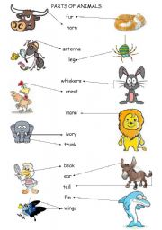 English Worksheets: parts of animals