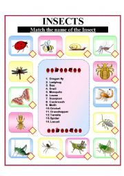English Worksheets:  Insects!
