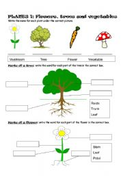English Worksheet: Plants Part 1: Flowers, trees and vegetables