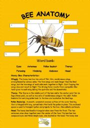 English Worksheet: Bee anatomy :) (key included-4pages)