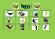 English Worksheets: Birds 1/5