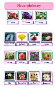English Worksheet: flower pictionary
