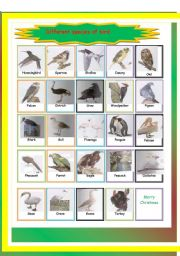 English Worksheets: different species of bird-pictionary