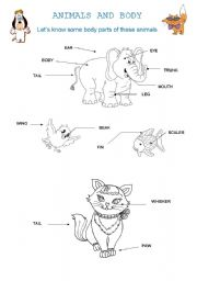 English Worksheet: Animals and body