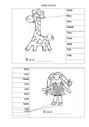 English Worksheet: Parts of body