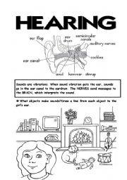 English Worksheet: 5 senses (4th part)