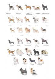 English Worksheets: Dogs