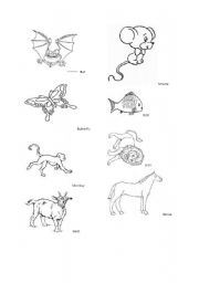 English Worksheets: Animal pictures